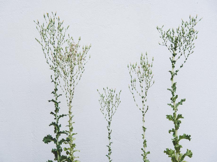 primal_web_m005_magnolia_01.jpg
